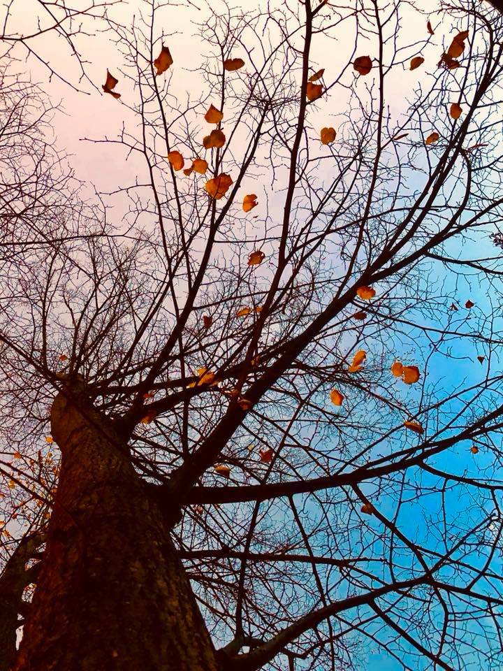 A Last days of fall, taken on 11-3-07.